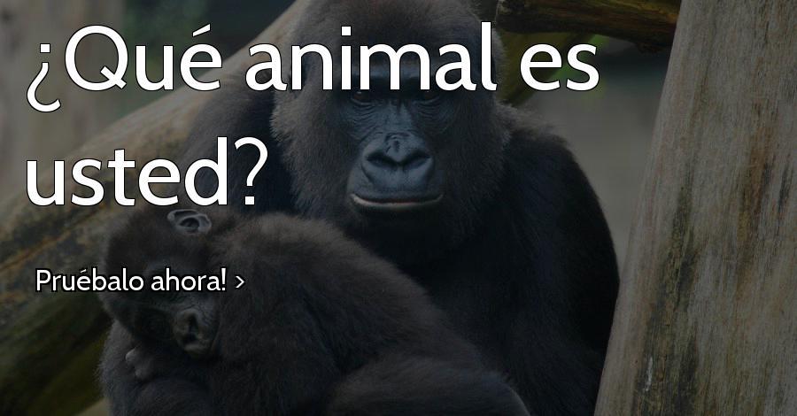¿Qué animal es usted?